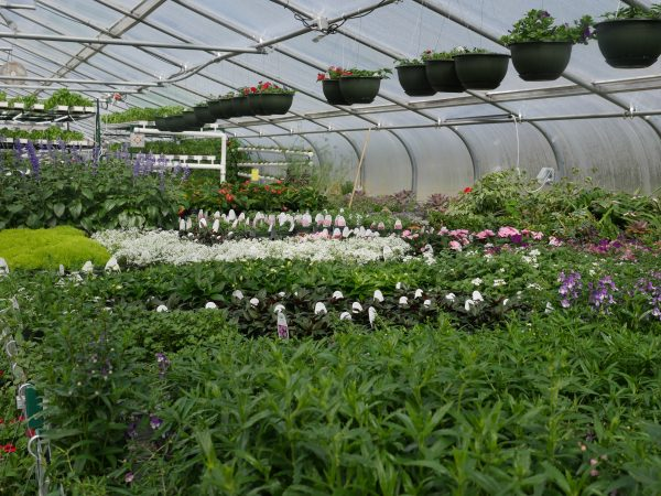 ACCESS Gardens Spring/Summer Plant Sales are Here